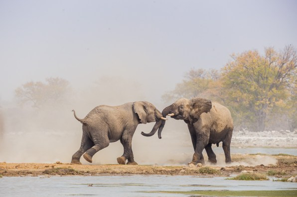 Etosha Game Reserve Self Drive Namibia -90