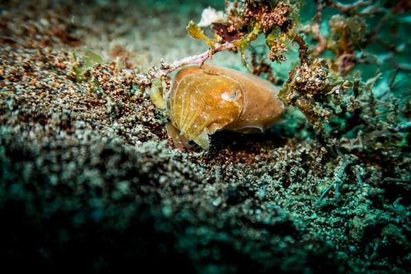 Dauin Philippines Muck Diving Site Photos -33