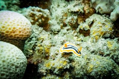 Dauin Philippines Muck Diving Site Photos -65