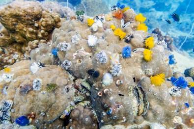 Koh Tao Scuba Diving Site South West Pinnacle -55