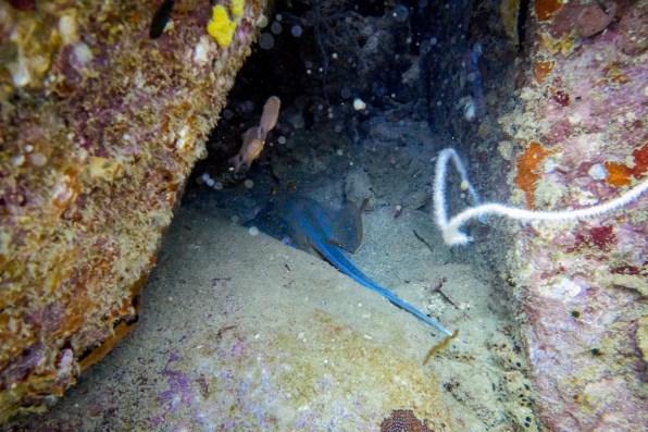 Koh Tao Scuba Diving Site South West Pinnacle -68
