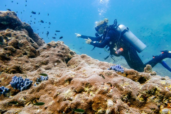 Koh Tao Scuba Diving Site South West Pinnacle -76