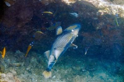 Koh Tao Scuba Diving Site South West Pinnacle -77