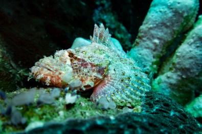 Apo Island Philipines Scuba Diving -22