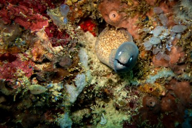Apo Island Philipines Scuba Diving -23