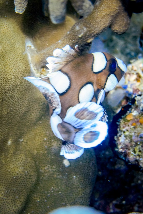 Apo Island Philipines Scuba Diving -28