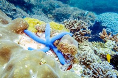 Apo Island Philipines Scuba Diving -37