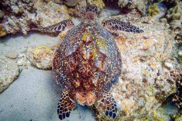 Apo Island Philipines Scuba Diving -65
