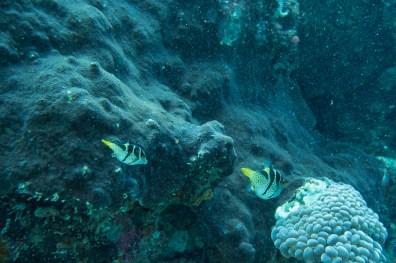 Apo Island Philipines Scuba Diving -71