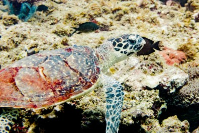 El Nido Scuba Diving -46
