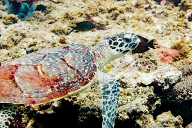 El Nido Scuba Diving -46