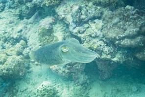 El Nido Scuba Diving -87