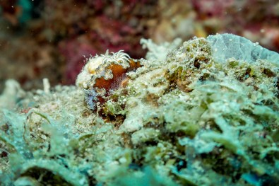 El Nido Scuba Diving -88