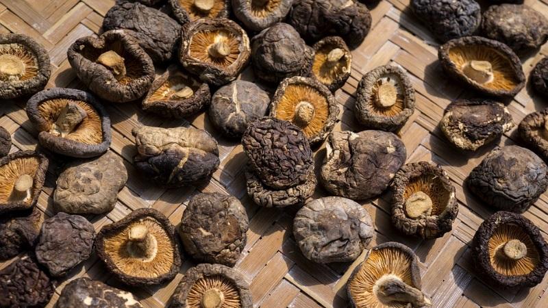 funghi shiitake proprietà benefici e controindicazioni