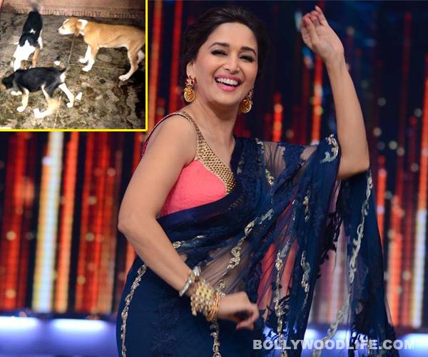 Jhalak Dikhhla Jaa 6: Madhuri Dixit-Nene saves seven pups on thesets!