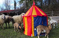 Dulcamara-circo list01