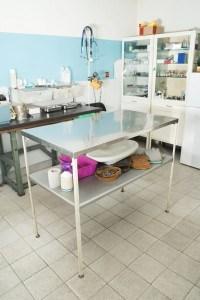 Den Bolonka Zwetna beim Tierarzt einschläfern lassen