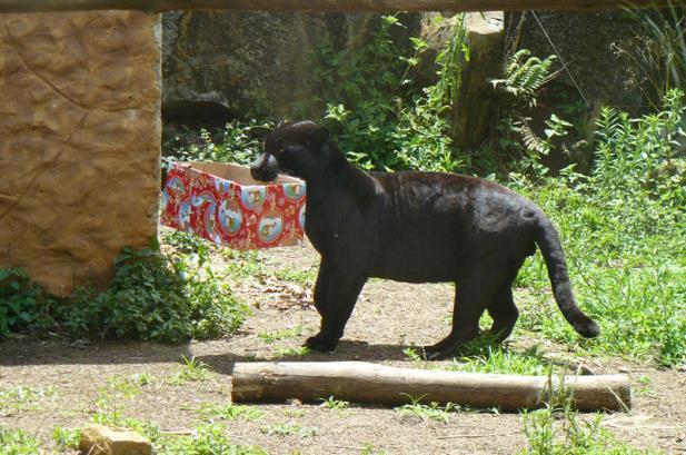 Animal do Gramado Zoo