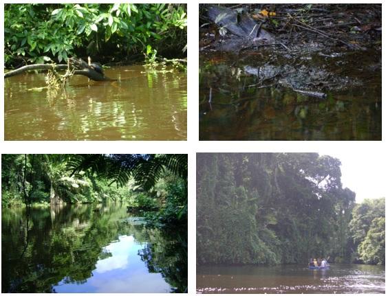 Passeio de canoa no rio em Toruguero em Costa Rica