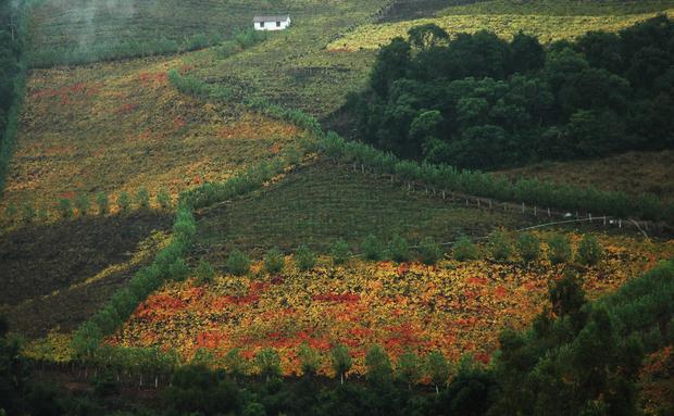 Bento Gonçalves é um dos melhores destinos para viagem em julho