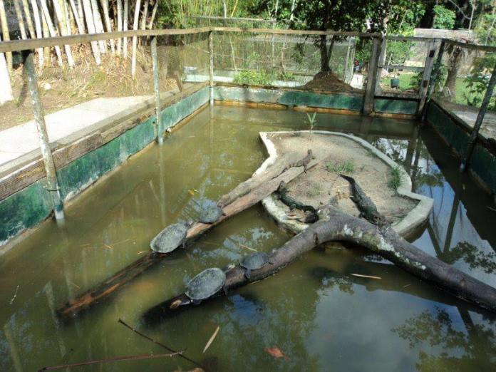 tartaruga do zoológico de Iquitos