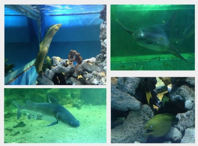 Algumas espécies marinhas encontradas na Ilha dos Aquários em Arraial d'Ajuda