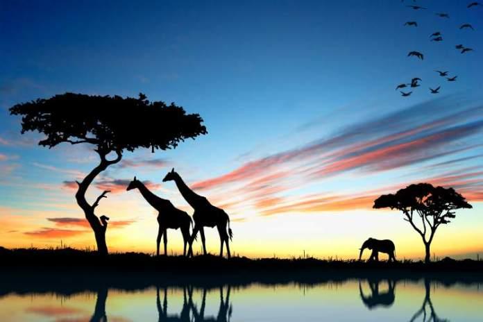 África do Sul é um dos destinos subestimados de lua de mel que vão te conquistar