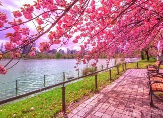 Tóquio é um dos melhores destinos para viajar em Maio