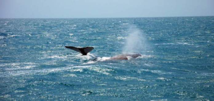 Baleias Jubarte na ilha de Boipeba na Bahia