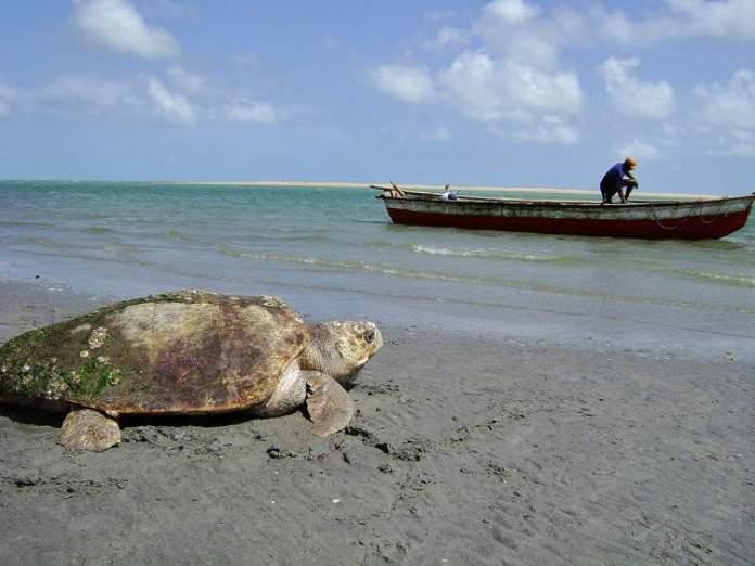 Praia de Almofada é uma das praias mais bonitas do Ceará