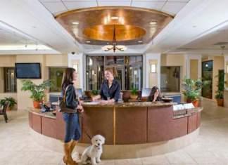 Hotel para se hospedar com cachorros