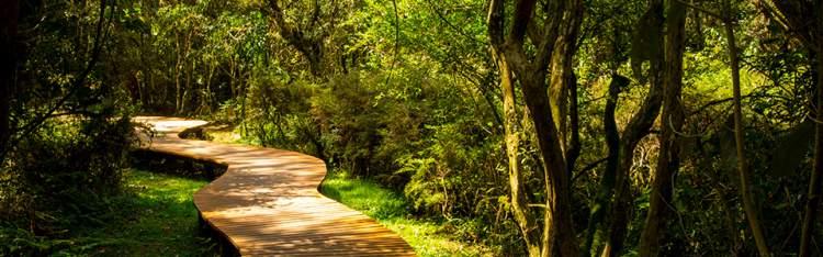 Bosque do Silêncio é um dos passeios fantásticos em Campos do Jordão