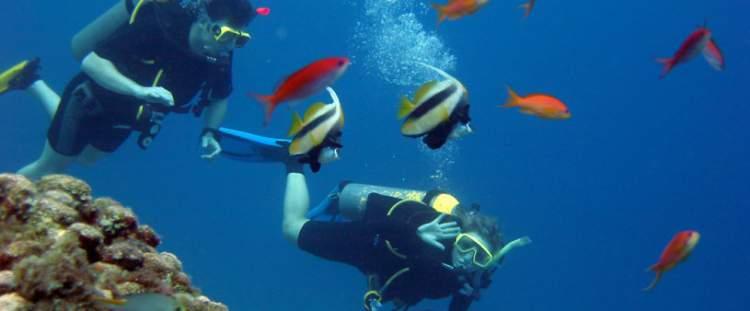 Mergulho Arraial do Cabo