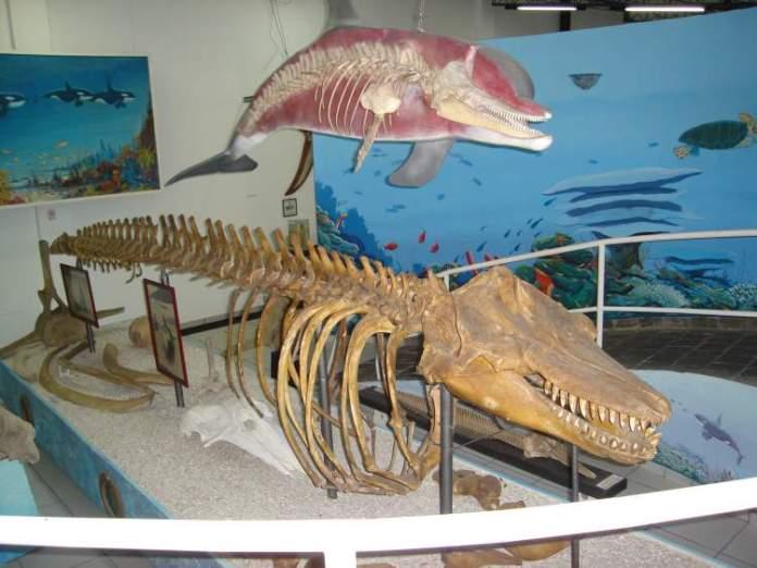 Museu Oceanográfico Arraial do Cabo