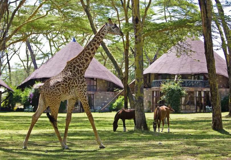 Hotéis de selva capa