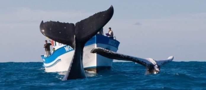 Ver as baleias Jubarte é um dos passeios em Morro de São Paulo