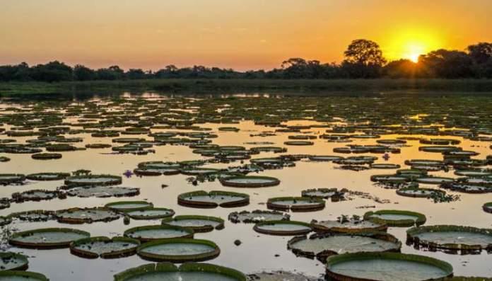Pantanal é um dos melhores destinos para viajar em outubro no Brasil