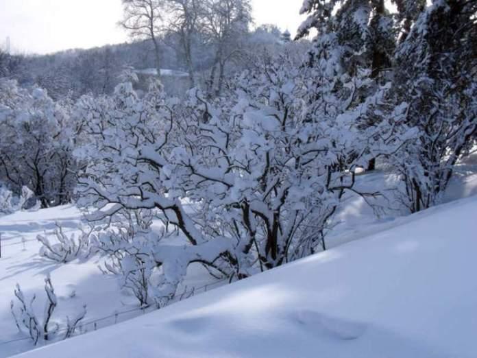Palmas no Paraná é um dos lugares no Brasil que costumam nevar no Inverno