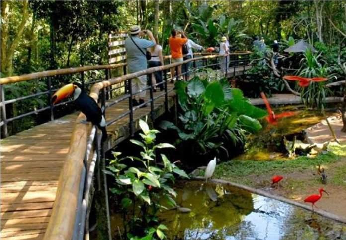 Conhecer o Parque das Aves é um dos passeios imperdíveis em Foz do Iguaçu