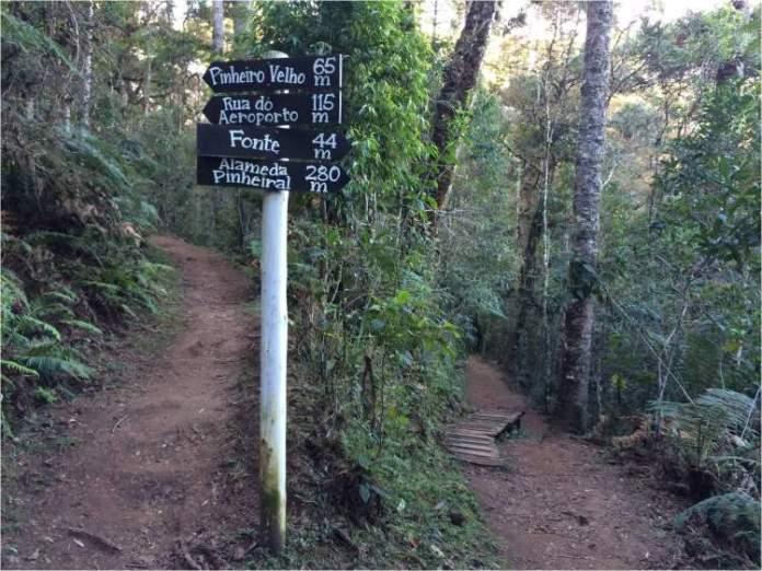 Fazer a Trilha do Pinheiro Velho é uma das dicas de o que fazer em Monte Verde