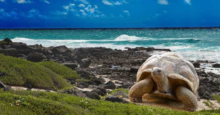 Ilhas Galápagos é uma das praias mais bonitas do Equador