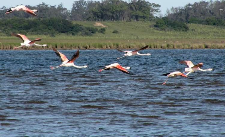 Laguna de Rocha é um dos destinos encantadores no Uruguai