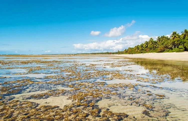 Quarta Praia é uma das melhores praias e piscinas naturais da Bahia