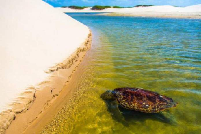 Ilha do Caju é uma das incríveis ilhas brasileiras