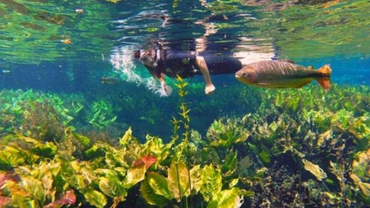 Aquário Natural em Mato Grosso do Sul
