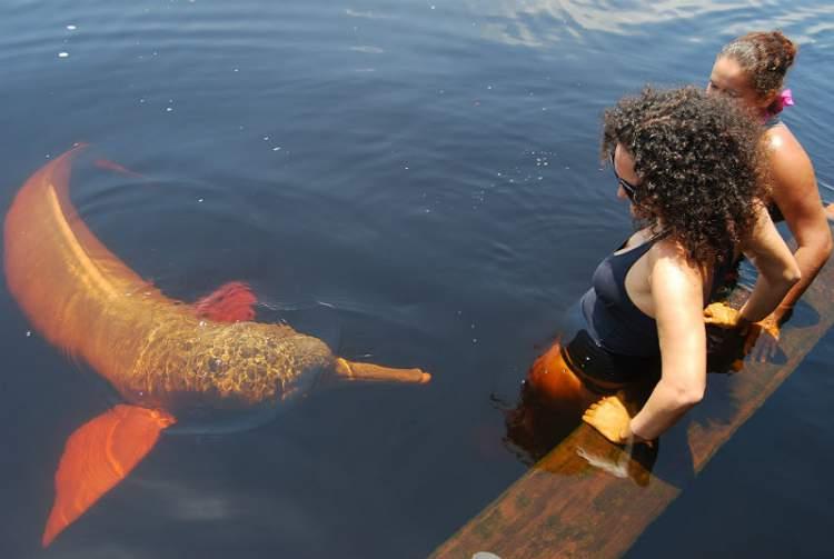 Novo Airão é um dos destinos no Brasil para ver animais em estado selvagem