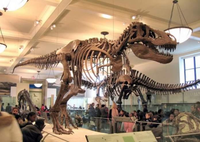 O que fazer em Nova York Visita ao Museum of Natural History