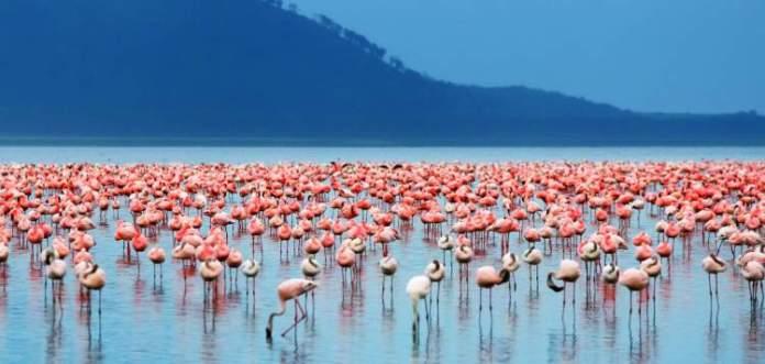 Safári na África no Lago Nakuru