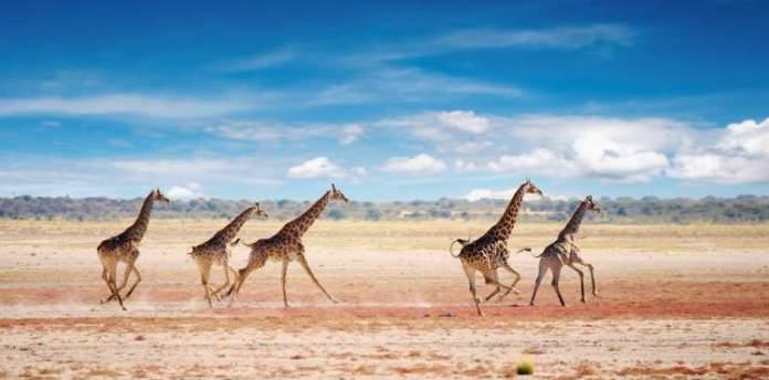 Safári na África no Parque Nacional de Etosha