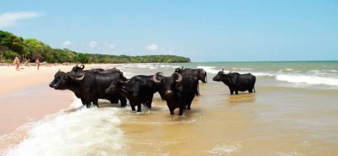 Ilha do Marajó é um dos destinos turísticos e baratos no Brasil